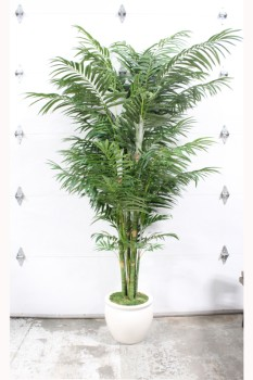 Plant, Fake, 9FT XL FAKE BUTTERFLY PALM, WHITE/IVORY PLANTER - *Must Be Returned With All Branches*, PLASTIC, GREEN